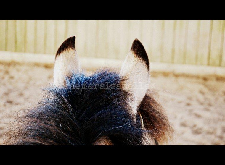 '[/c ] Au cheval fourbu la crinière peut ne pas être un fardeau '