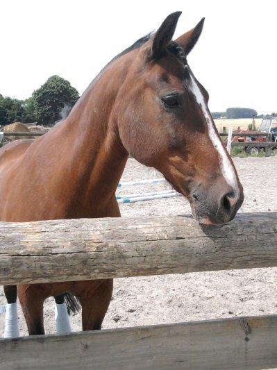 faites du cheval un compagnon et non un esclave, vous verrez quel ami extraordinaire il est.