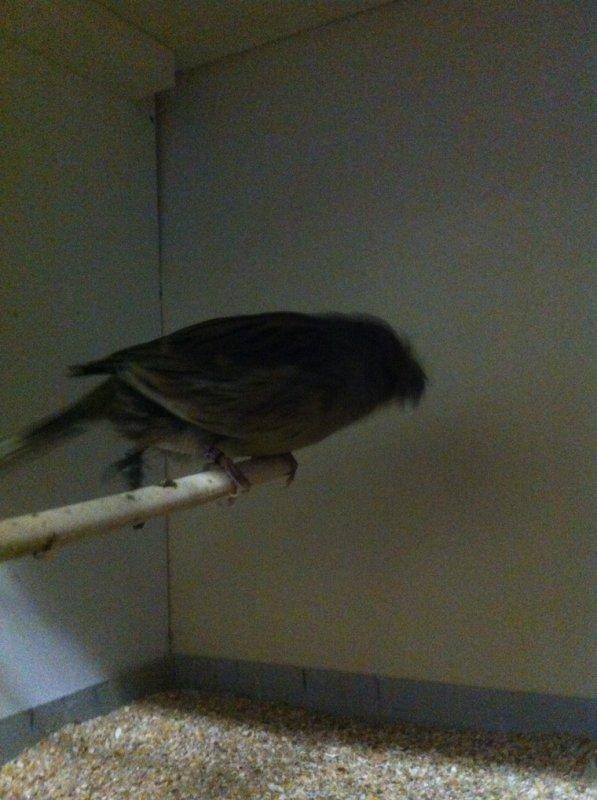 Mais nous crests provenant de chez Jimmy a passer une bonne aprem a parler d'oiseau