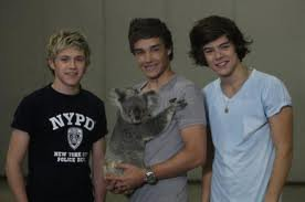 One Direction et le koala.