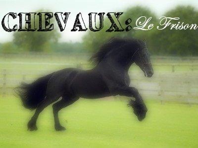 ✽Les races de chevaux ✽