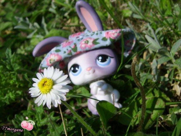 Oh la belle fleur mon univers petshop for La belle fleur
