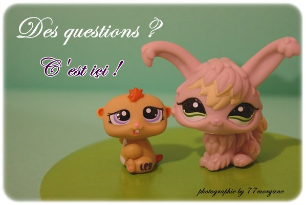 Espace questions !