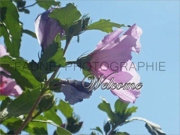 Bienvenue sur le blog de Faune-Photographie ☼