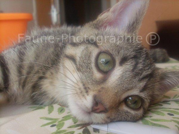 Mon amour de chat, Bambou