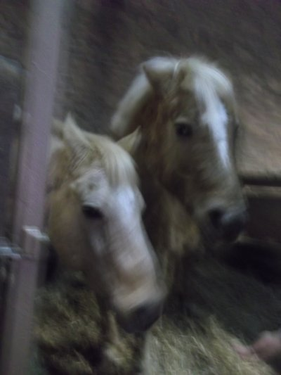 Bull et Victor