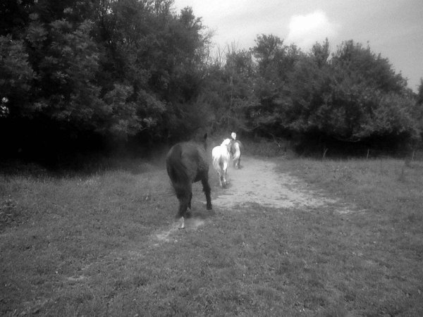 Bull , Joly & Vivante