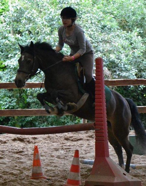 Concours de saut d'obstacle !