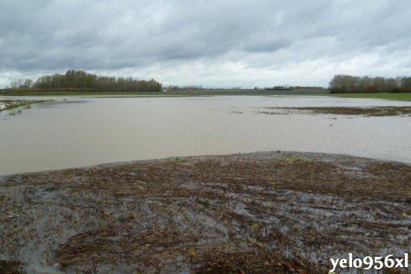 L'état des champs après les pluies de mi-novembre...