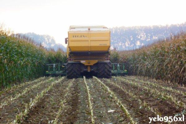 Pro DX III à l'ensilage de maïs