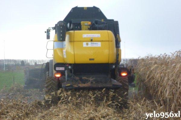 Moisson de maïs grain avec NH CX8050
