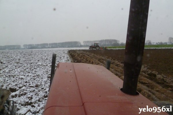 Semis sur la neige