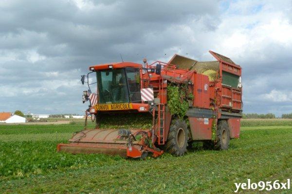 Récolte d'haricots avec BCMH
