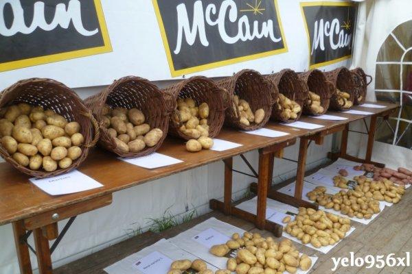 Potato Europe 2011