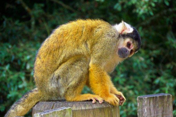 Zoo des Sables , Vendée 26.07.2013