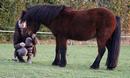 Photo de My-Teddy-Pony