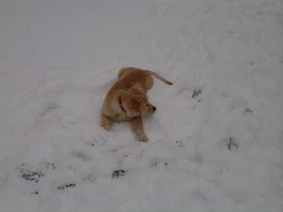 la pose dans la neige