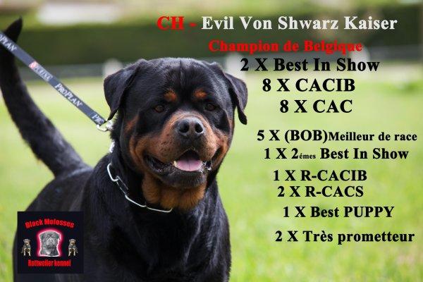 Evil Von Schwarz Kaiser (( Champion de Belgique !! ))