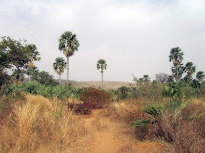 un vue de la forêt de gouna