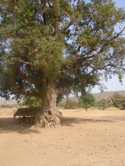 la place public l'arbre à palabre de foukara