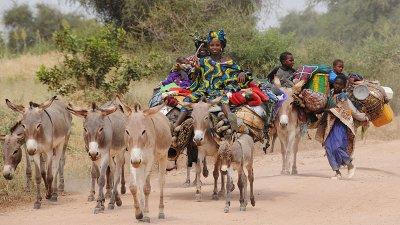 les femmes  nomades en transumence