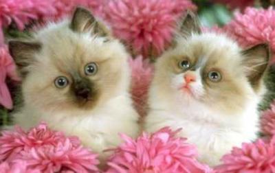 les chats dans la sosiété