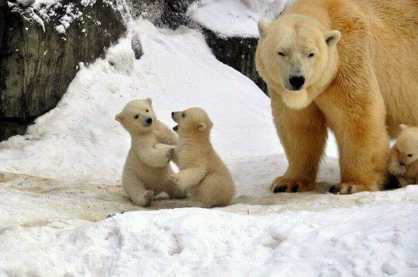 maman ourse veille sur eux