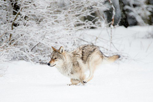 Course dans la neige