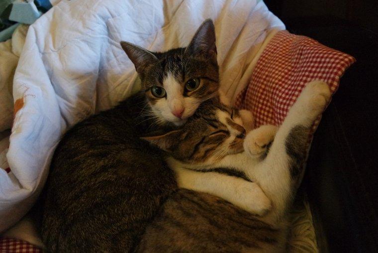 Six chatons & leur mère