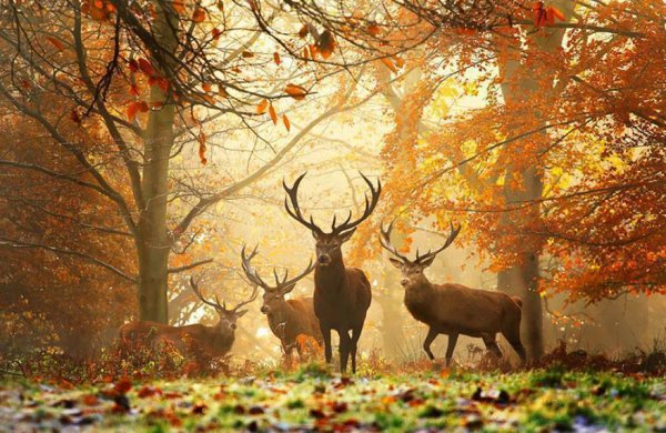 Quand automne en saison revient