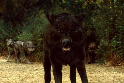 twilight loup-garou