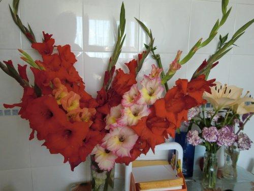Mes fleurs du moment.