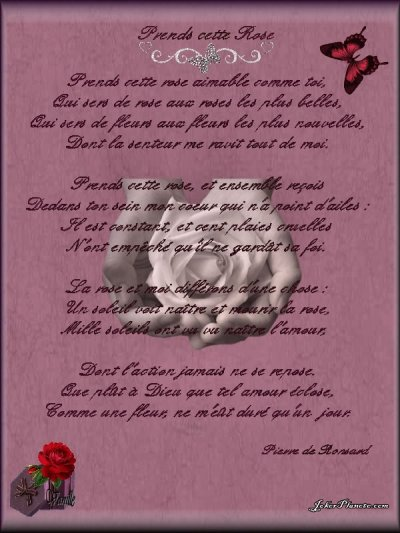 Prends cette rose