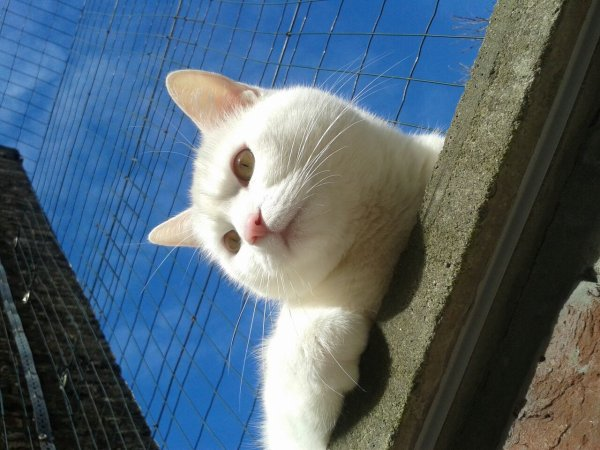 Trop beau mon Chat ;-)