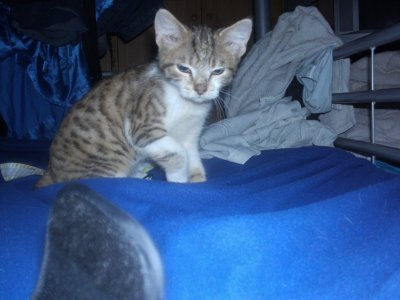 mon chat (l) !!!