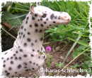 Photo de HorseSchleich-pub