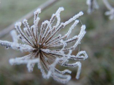 Promenade hivernale.