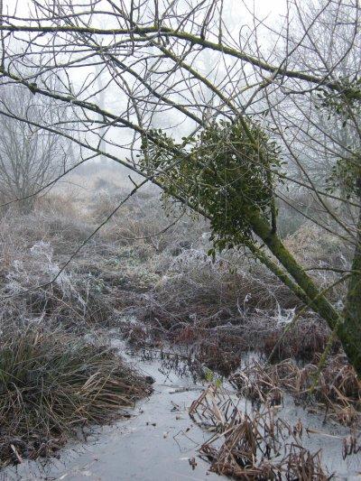 Promenade hivernale, suite