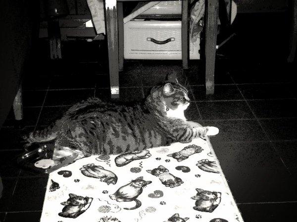 déjà 29 semaine demain que tu es partie mémère - Hommage as mémère une de mais chatte décède