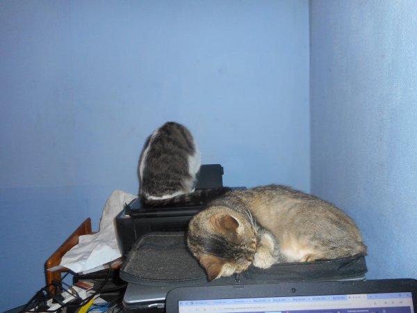 gryssette et zoe ensemble chaqu une  leur imprimante et pc
