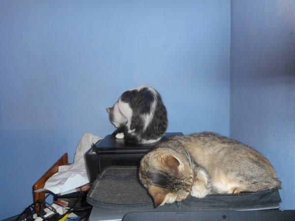Hommage as mémère ma chatte déjà 49 semaine que tu es partie mémère Hommage as mémère une de mais chatte décède