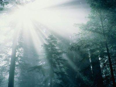 Mira la luz, goza la vida