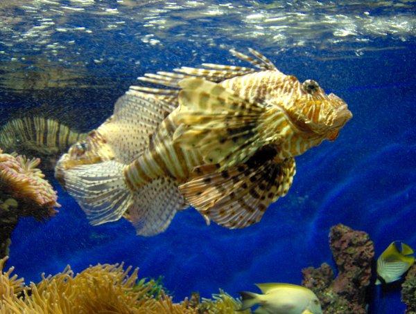 Beau et curieux poissons d'avril