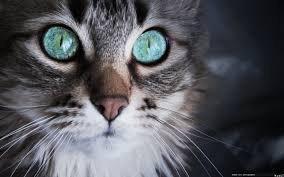 Bon, c'est pas sur la K-Pop, mais il est trop beau ce chat !