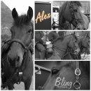 Photo de Bling-horses