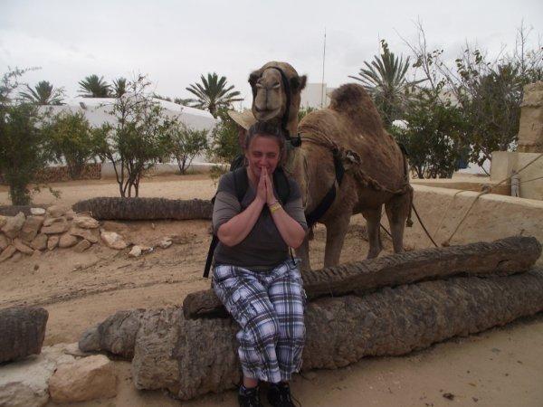 Avec le chameau
