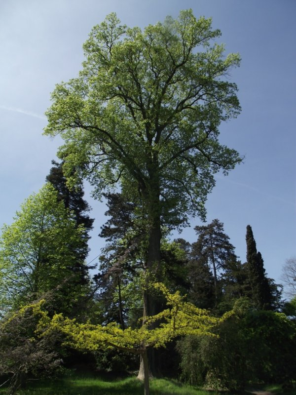 A l'arboretum