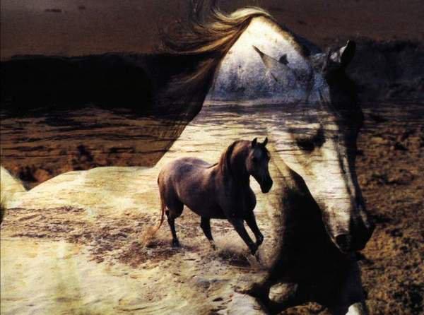 Jolie image de chevaux