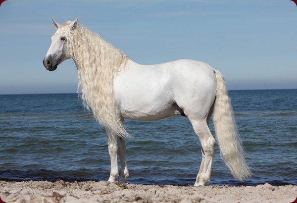 mes chevaux préféré