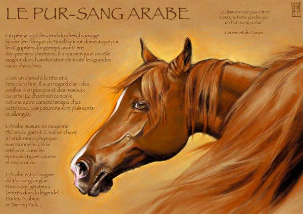 le pur sang arabe